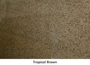 largetropicalbrown