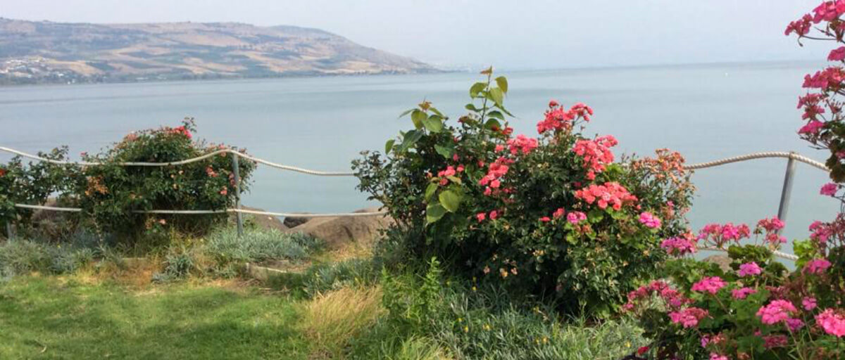 Flowers on the shore of the Sea of Galilee