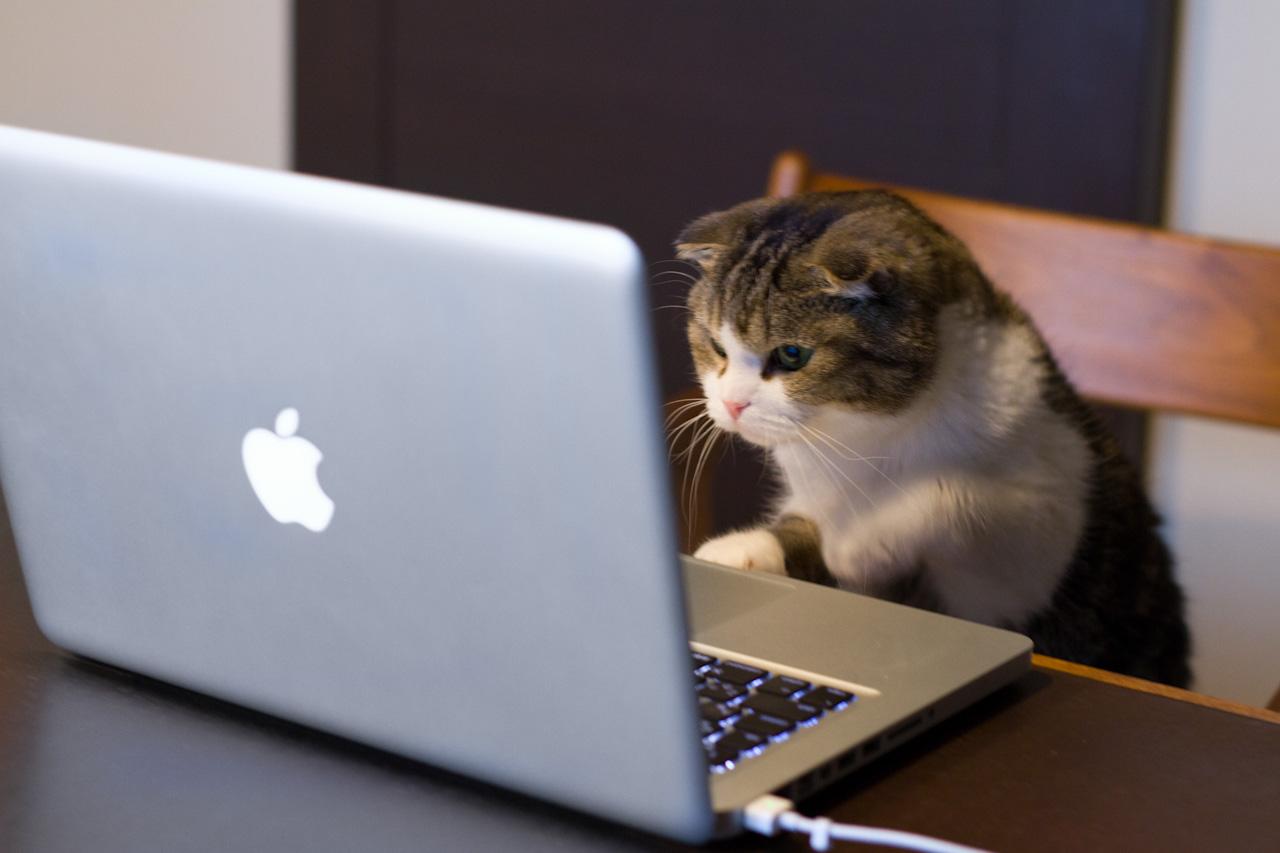 5cat_using_computer