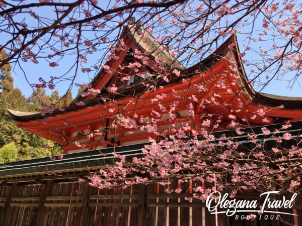 vacation destinations based on months of the year - Cherry Blossom Treein Japan