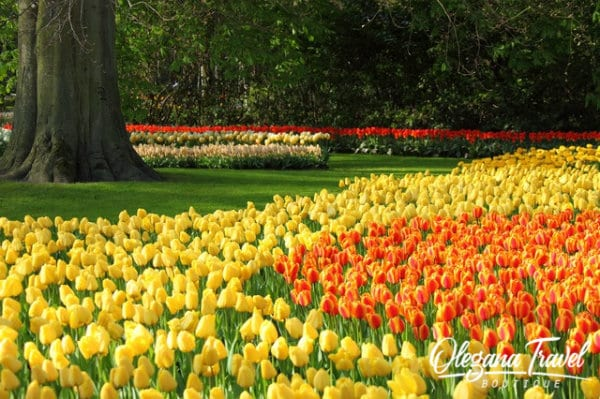 vacation destinations based on months of the year - Tulip Season in Netherlands