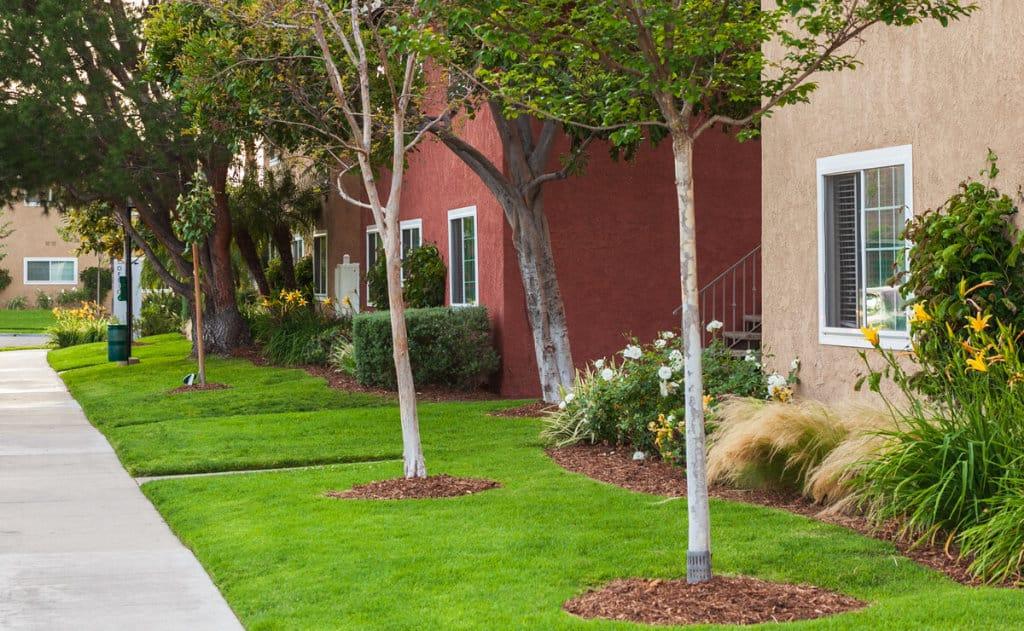 Grassy walkways with green plants