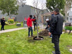 Group of men planting tree at the courtyard