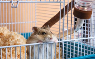 Three Ways to Help Your Pet Adjust to Your Pet-Friendly Apartment