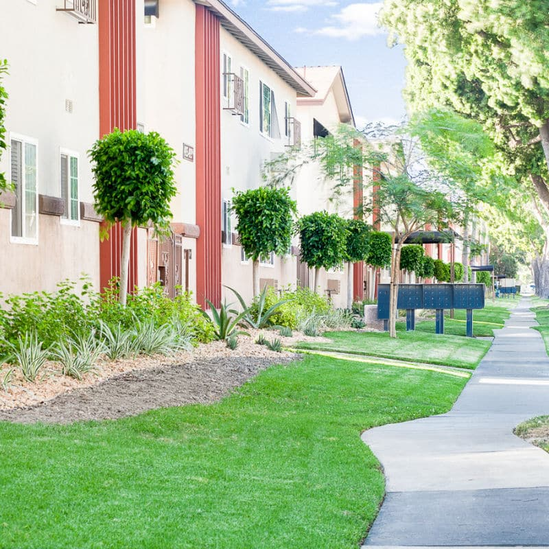 Grassy Sidewalks with green plants and trees