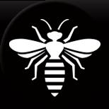 Wasp/Bees