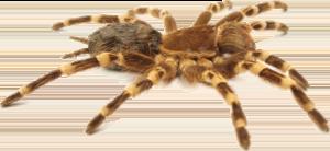 melbourne trap door spider