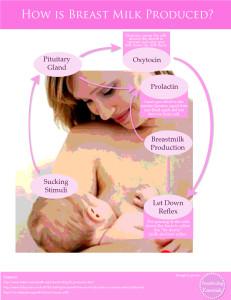 Breast Milk Production