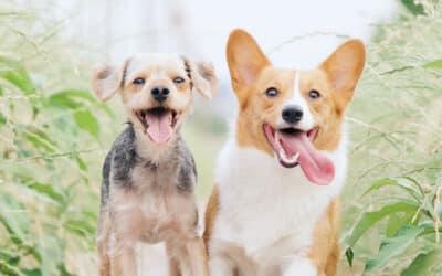 Benefits of a Pet-Friendly Apartment Community