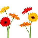 daisy-meaning-the-gift-guru