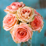 pink-rose-meaning-the-gift-guru