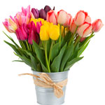 tulip-meaning-the-gift-guru