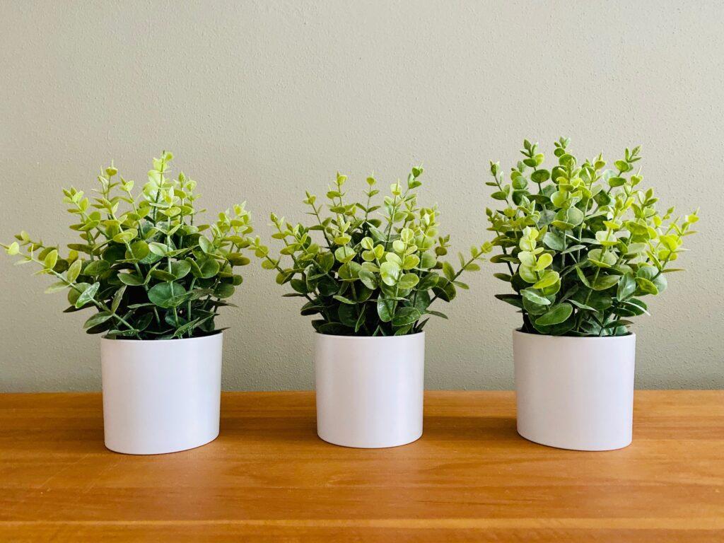 Set of 3 Modern Artificial Eucalyptus