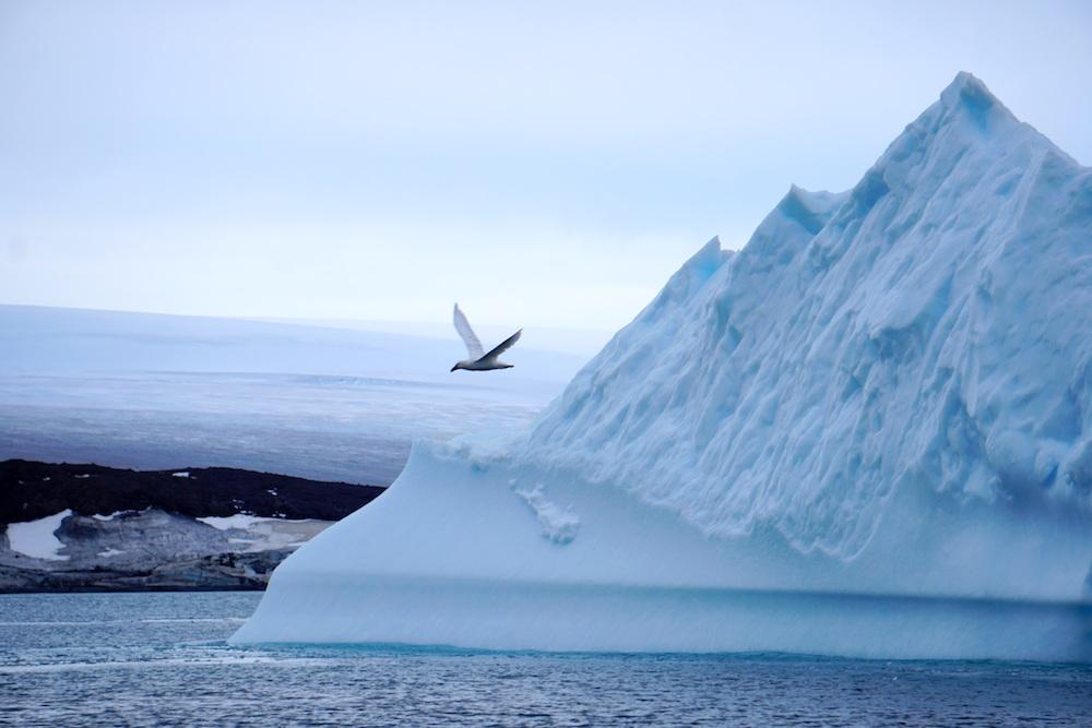 sea_gull
