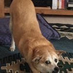 Meet Katie, Canine Coworker & Officemate