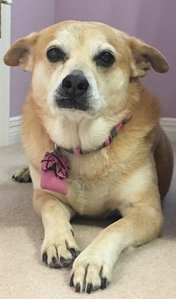 Katie-dog