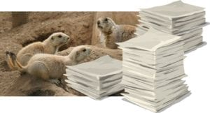 Popping Up Like a Prairie Dog! New Young Adult Fiction Author Tanya D. Dawson checking in again