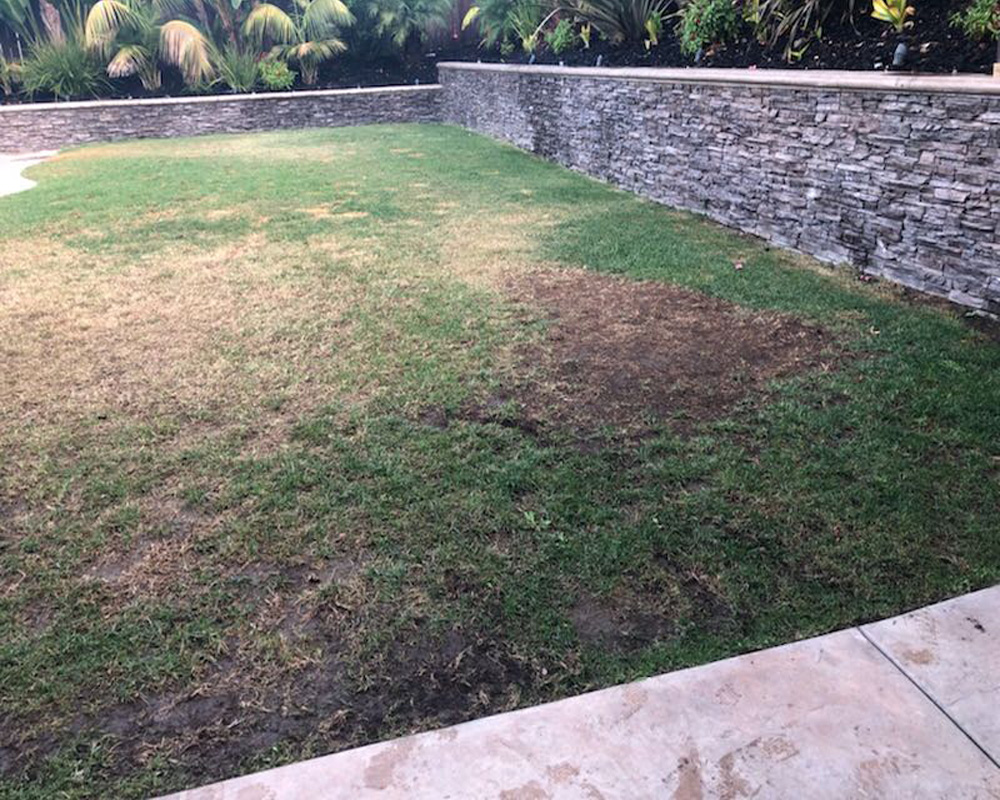 yard without turf