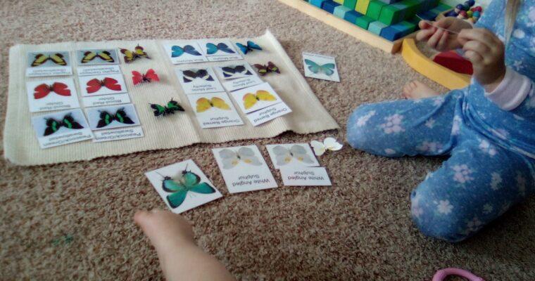 Butterfly Unit Montessori Style
