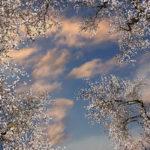 luminous sky ceiling panels