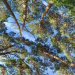 shirin yoku and forest bathing