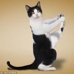 one legged cat stretch