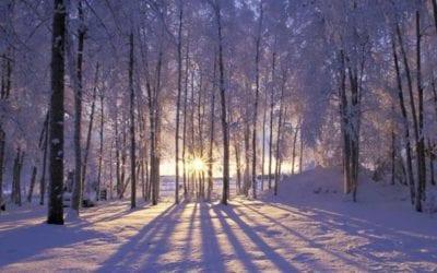 The Seasons of a Yogi