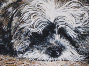 Bruno 13x18 oil on canvas panel
