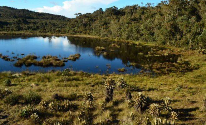 agua potable, alta montaña, Antioquia, Baldías, Belmira, biodiversidad, Colombia, Conservación, ecosistemas, flora, frailejon
