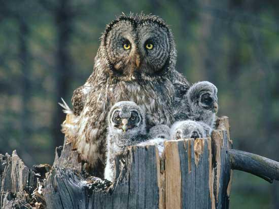 Buhos, familia de búhos, mamá búho y sus hijos, fotografía de búhos, galería madres naturale, Esfera viva