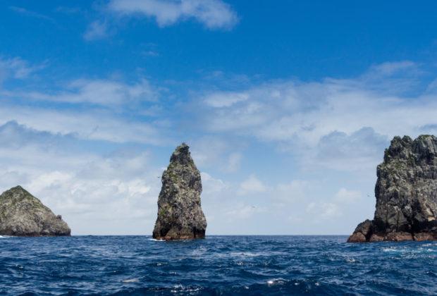 santuario de fauna y flora malpelo, malpelo, parques nacionales, tiburon martillo, colombia, biodiversidad, noticias ambientales, esfera viva