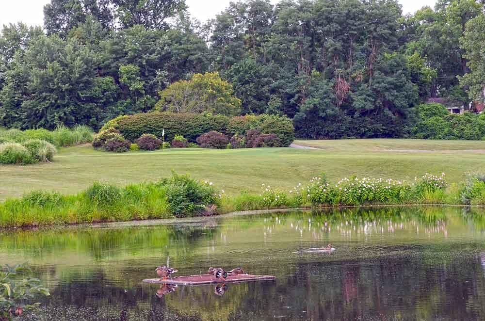Eagle-Springs-Golf-Course,-St-Louis,-MO-Drain