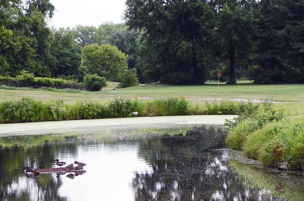 Eagle-Springs-Golf-Course,-St-Louis,-MO-Ducks