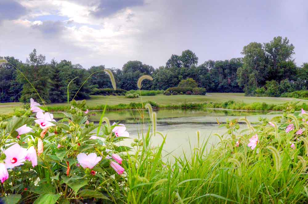 Eagle-Springs-Golf-Course,-St-Louis,-MO-Flowers