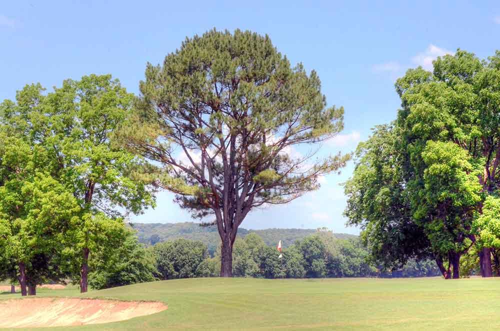Elk-River-Golf-Club,-Noel,-MO-Top-of-Hill