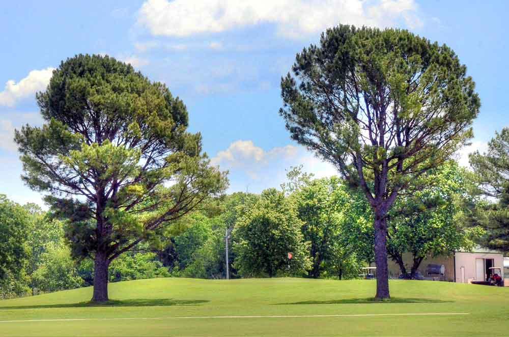 Elk-River-Golf-Club,-Noel,-MO-Trees