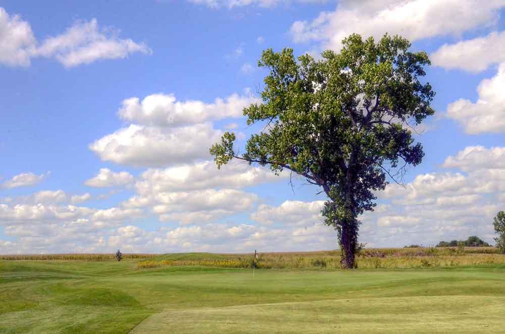 Hoot's-Hollow,-Pleasant-Hill,-MO-Tree