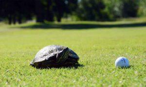 Meadow Lake Golf Course, Clinton, Missouri, golf courses in Clinton, MO
