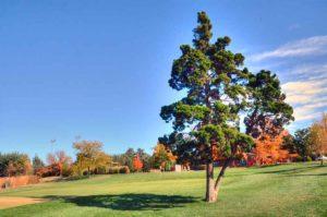 Highlands Golf and Tennis Center, fairway tree