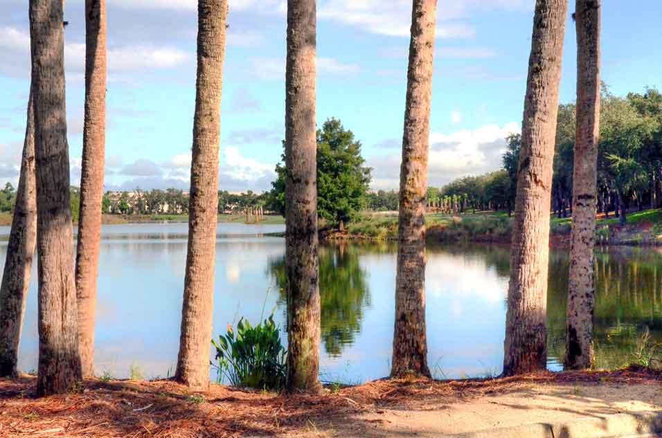 Tiburon,-Naples,-FL-Pines