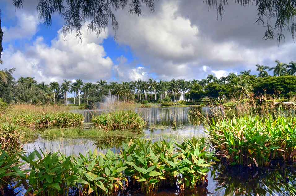 Tiburon,-Naples,-FL-Swamp