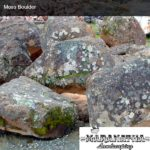 Moss Boulder - Maranatha Landscape Bakersfield