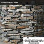 Sydney Peak Big Ledger - Maranatha Landscape Bakersfield