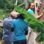 Botanical Garden Tour Jamaica