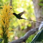 Doctor Bird at Ahhh Ras Natango Art Gallery and Botanical Garden Tour in Montego Bay, Jamaica