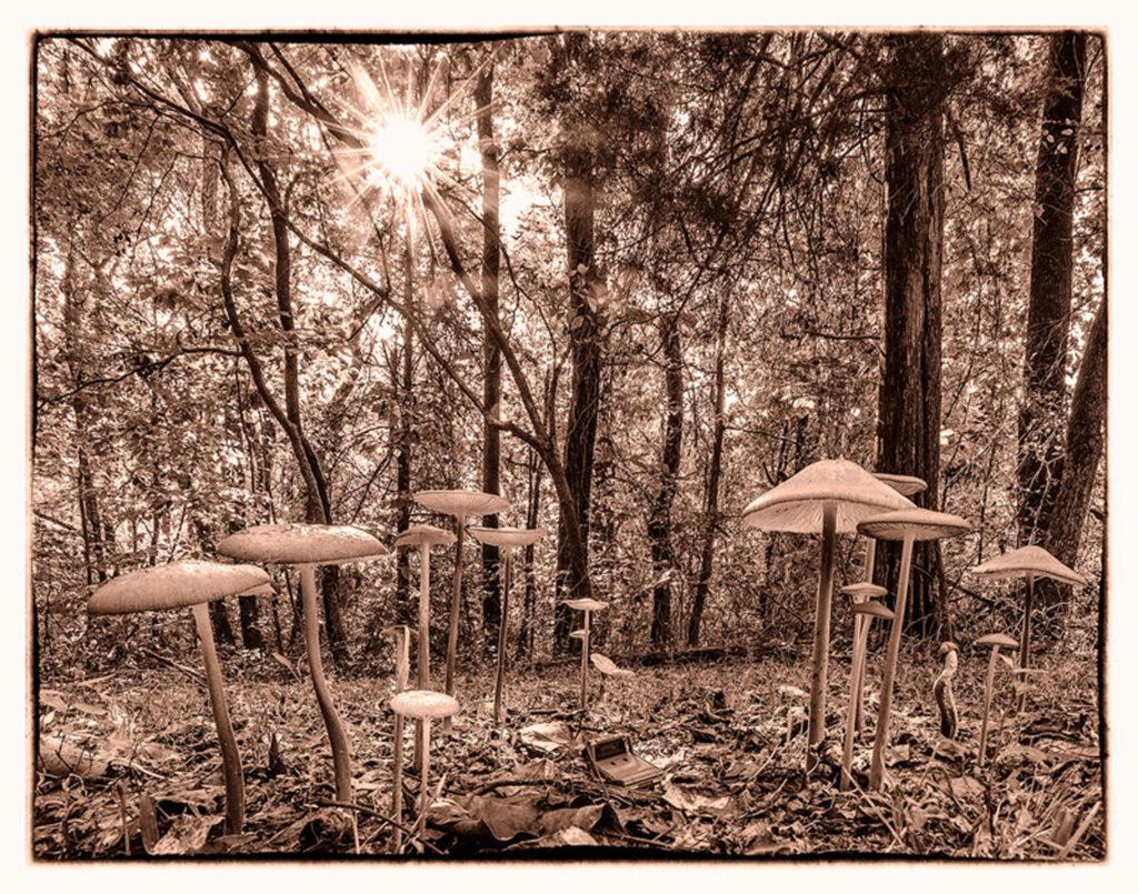 Mushroom Forest by David Boyd (CBTC: Oct. 2017-Jan. 2018)