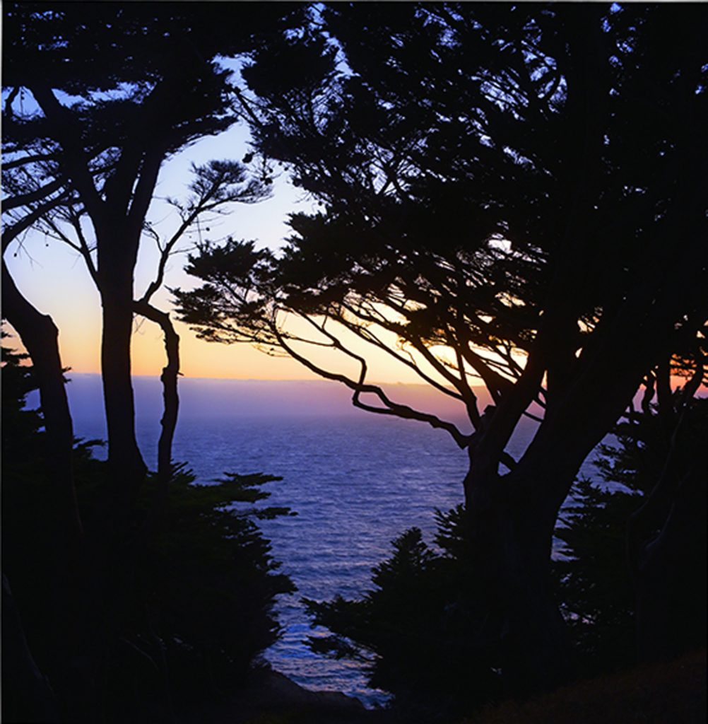 Sea Through the Trees by David Kennedy (CBTC: Jan.-June, 2018)