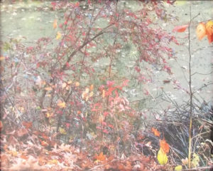 Water Color, Photograph by Chris McClintock, 8in x 10in, $75 (April 2018)
