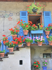 Blue with Geraniums, a metallic photograph by Deborah Herndon (MG: March 2013)