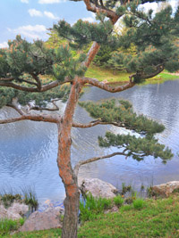 Lonesome Pine Botanic Garden, a metallic photograph by Deborah Herndon (MG: March 2013)